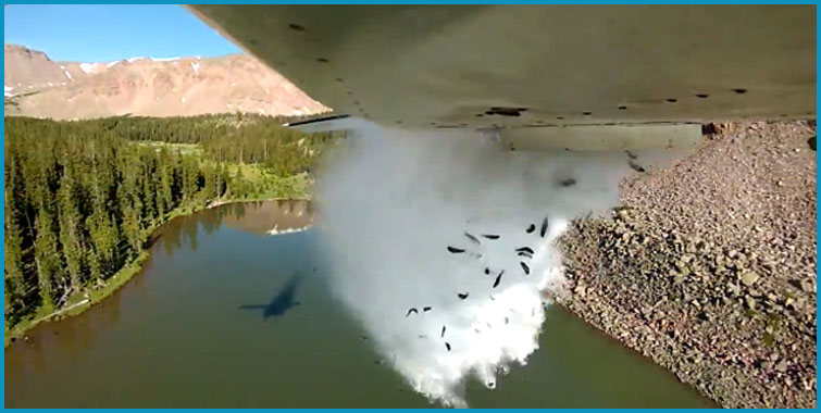 airplane-fish-dump-lake-utah